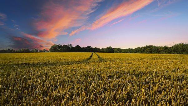 מה לא יספרו לכם על חקלאות הידרו?
